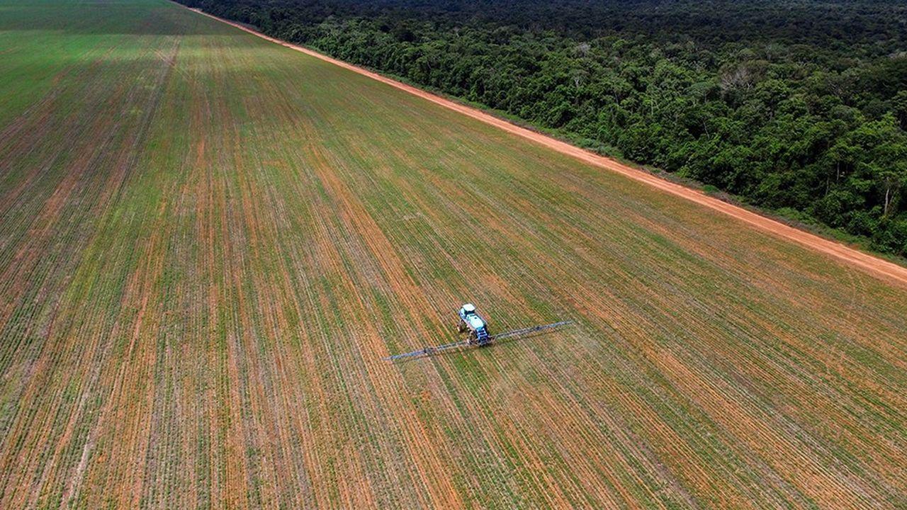 La déforestation dans le Cerrado, deuxième écosystème brésilien après l'Amazonie, a encore progressé de 9 % en 2017.