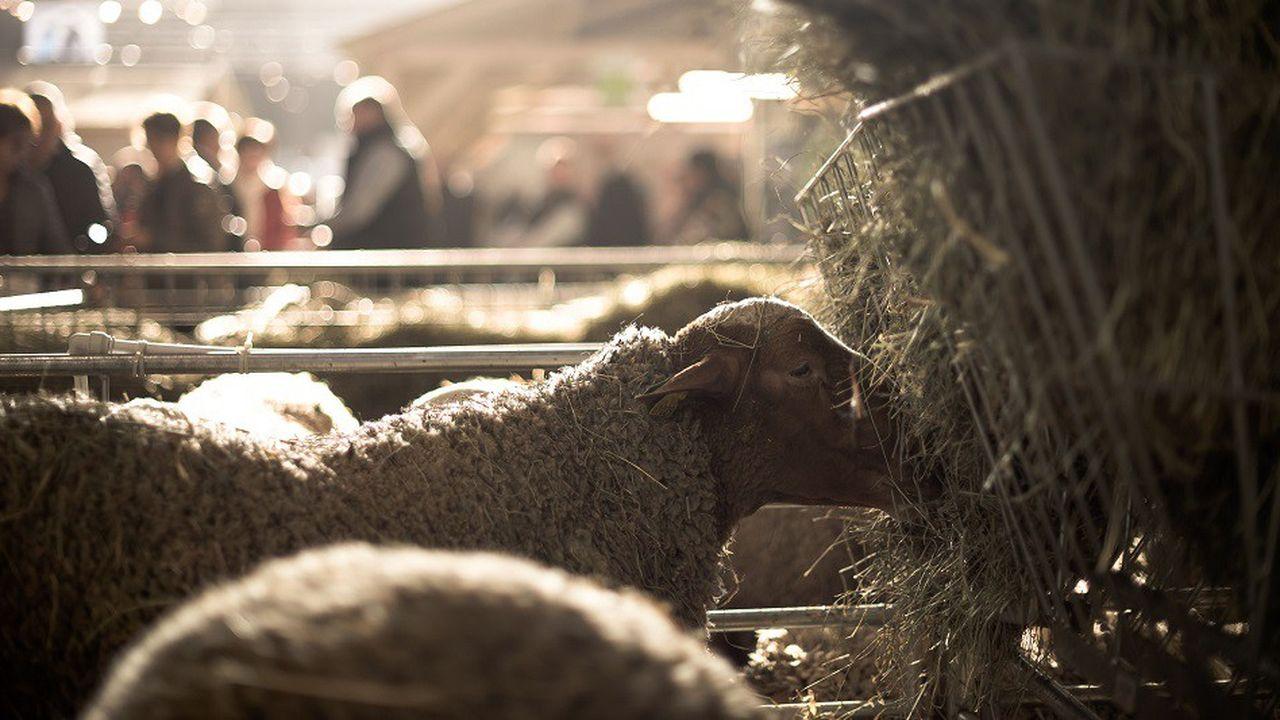 Le salon de l'agriculture, qui a lieu cette semaine à Paris, ne montre pas que le poids de ce secteur dans notre économie est en train de perdre de plus en plus d'importance.