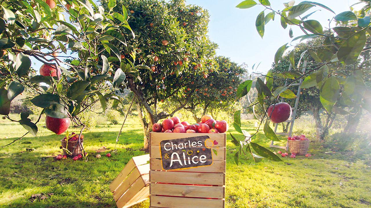 2225776_charles-et-alice-the-french-apple-a-la-conquete-des-etats-unis-1944-1-part.jpg