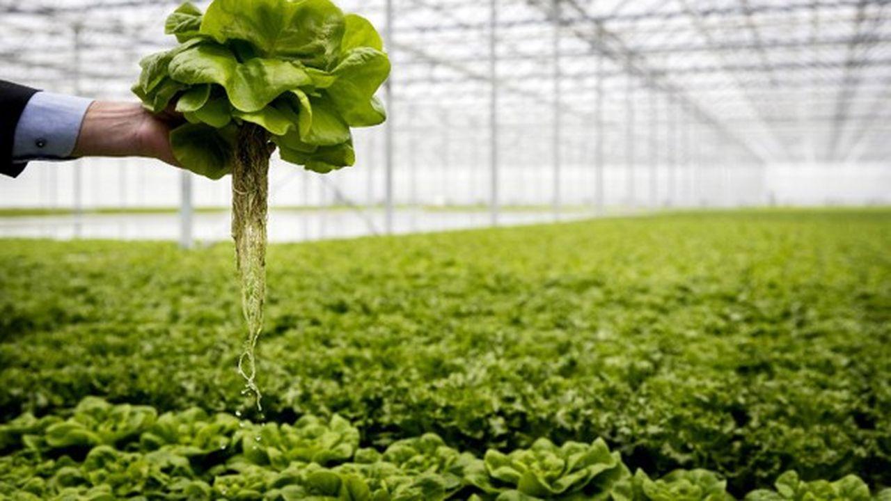 Les Néerlandais sont à l'affût de toutes les innovations pour vendre au meilleur prix leursdenrées vertes à leurs partenaires commerciaux.