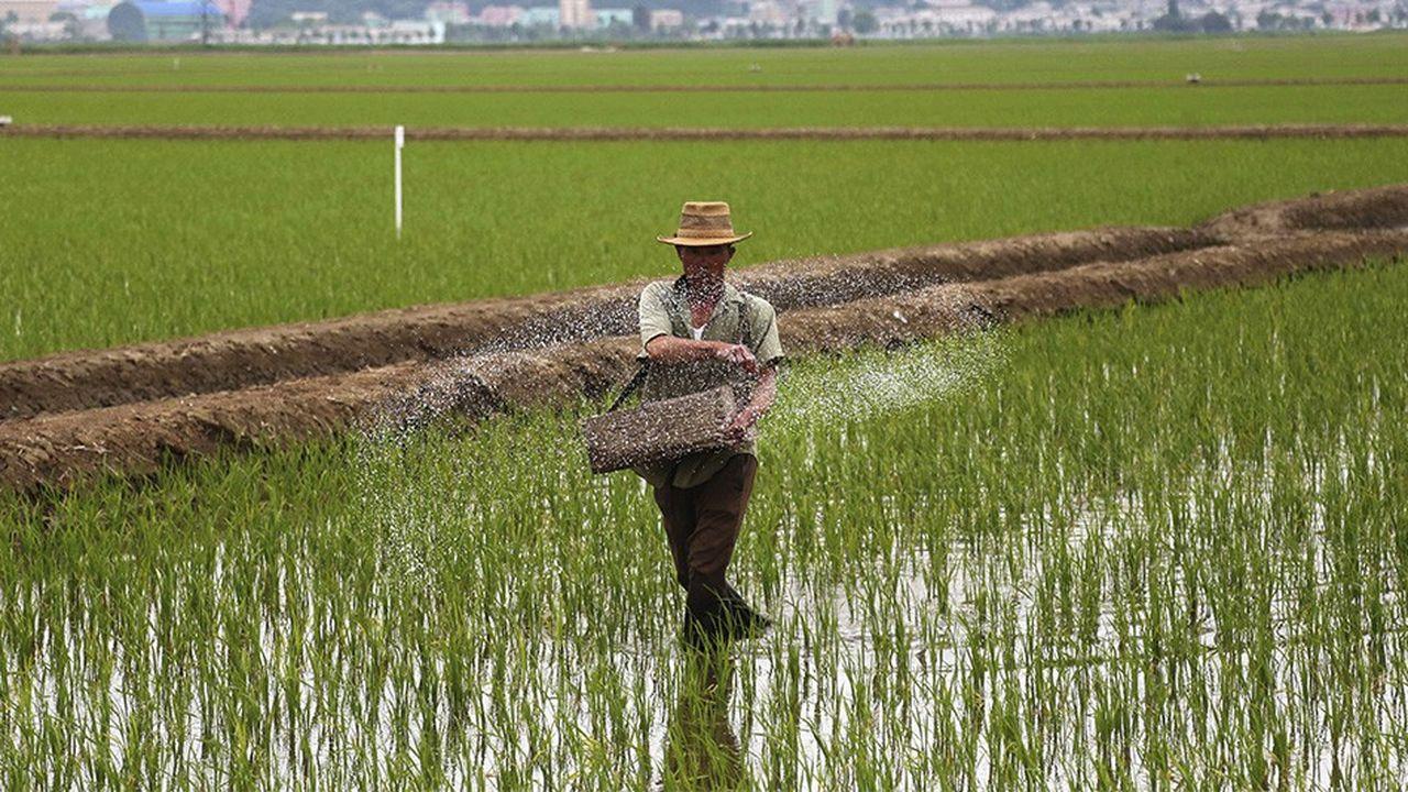 Les récoltes se sont élevées à 4,95millions de tonnes en 2018, en baisse de 500.000 tonnes