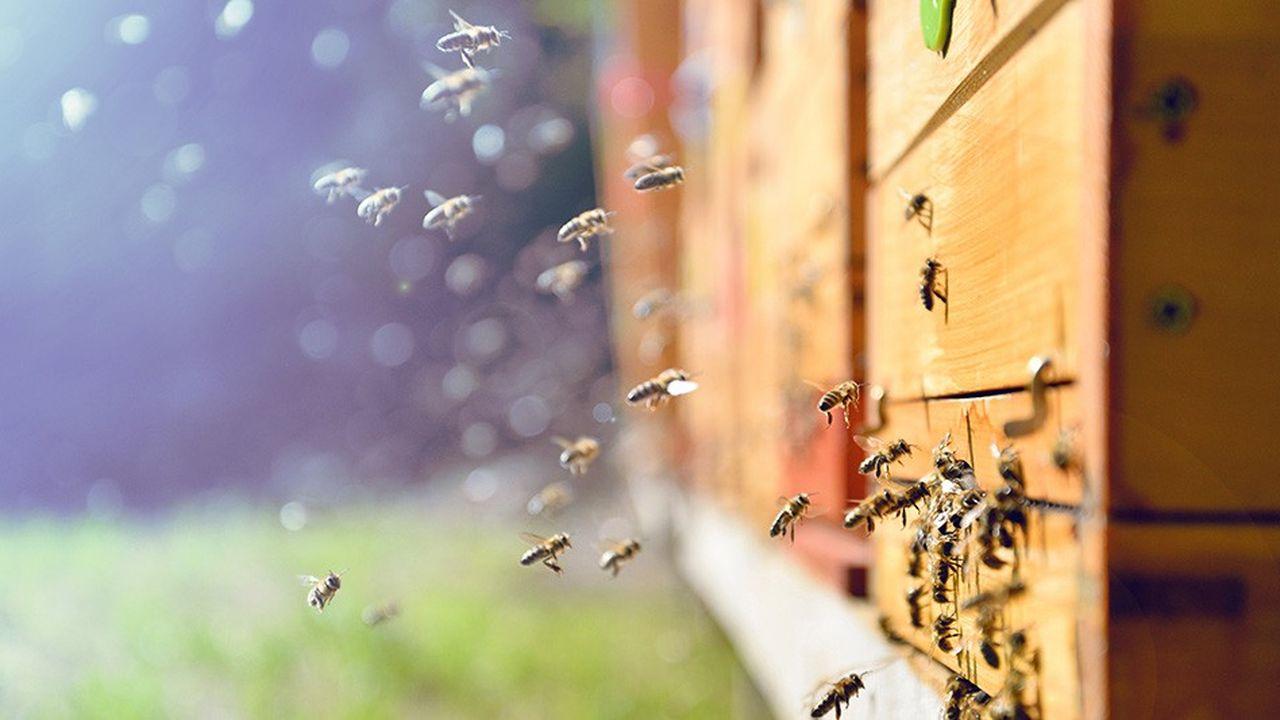 Les abeilles, une espèce en voie de disparition?