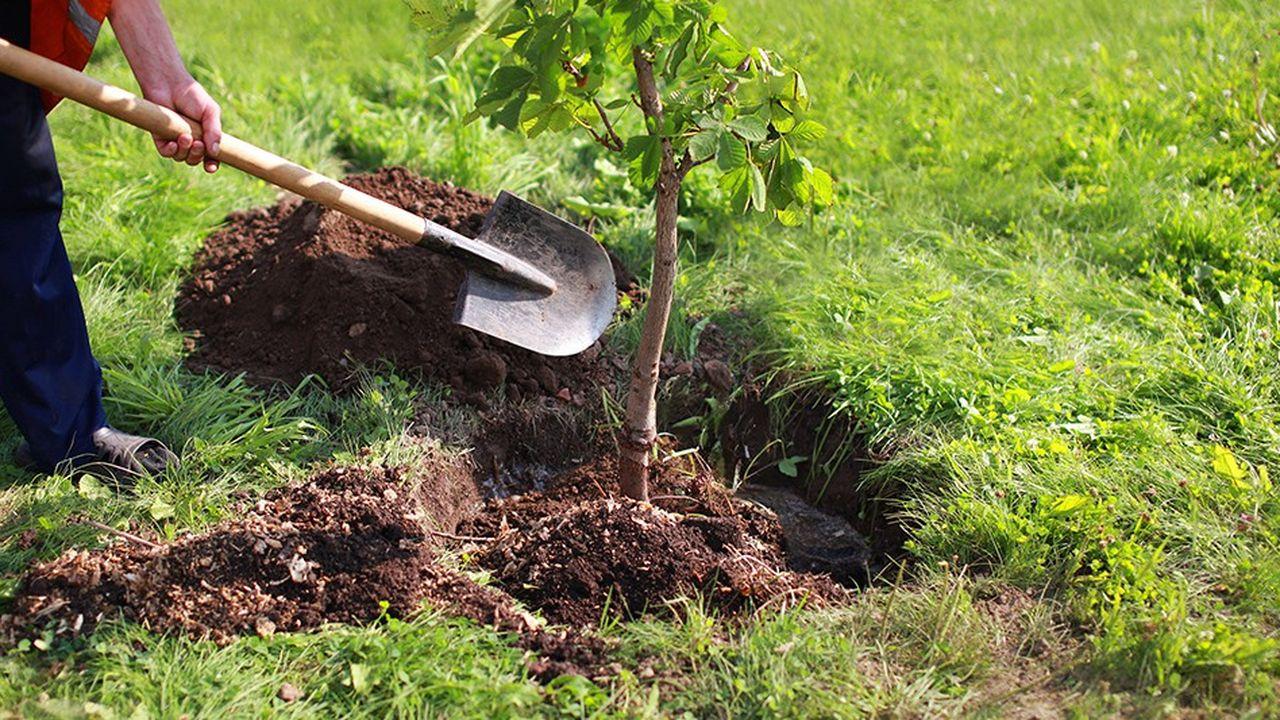 La ville de Montigny-lès-Cormeilles compte 45.000 arbres sur son territoire