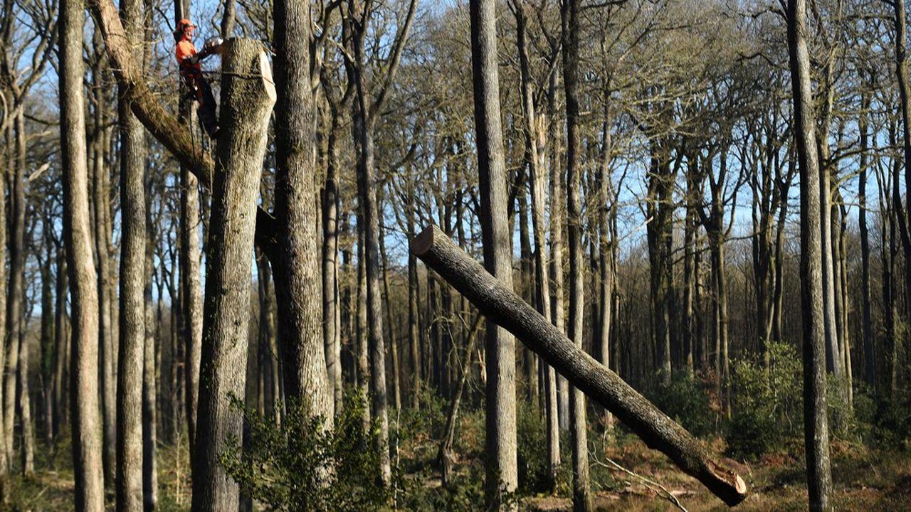 La forêt qui couvre près d'un tiers du territoire métropolitain absorbe 15% des émissions de la France. Son entretien et sa régénération sont des enjeux vitaux pour contenir le réchauffement climatique.