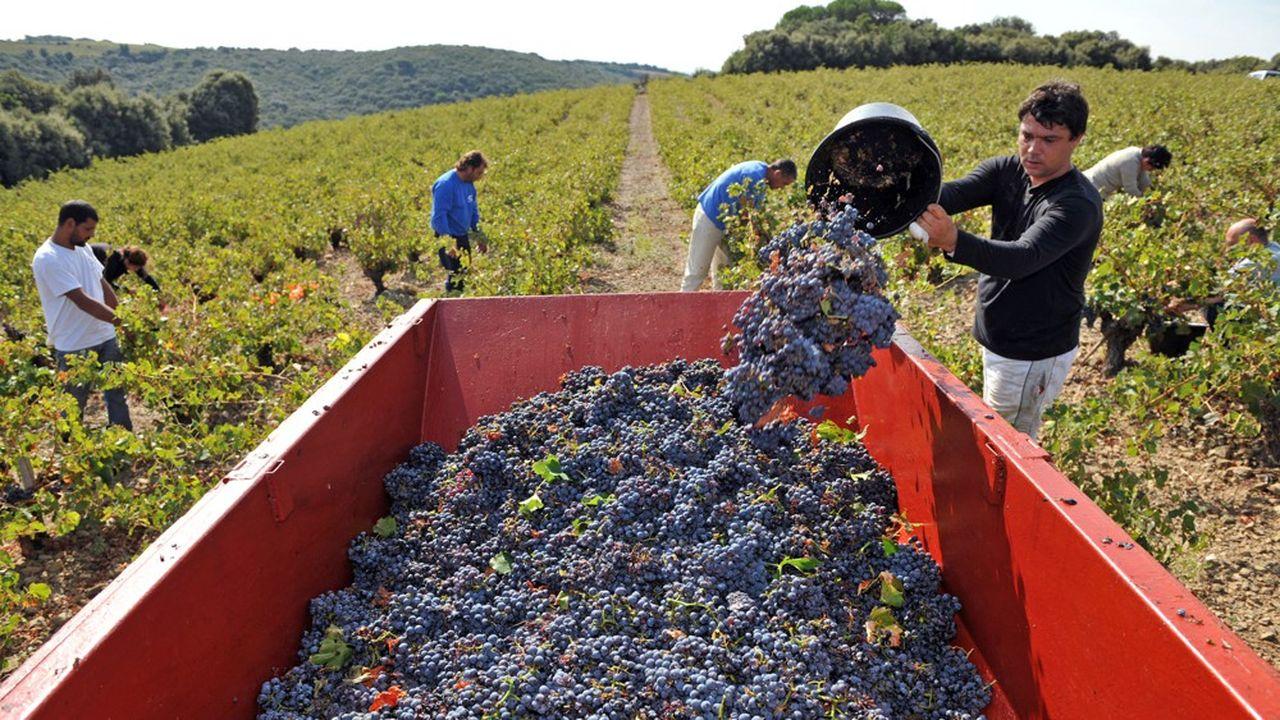 Le vignoble du Roussillon a produit l'an dernier 561.000 hectolitres (- 1%), sur 2.535 exploitations.