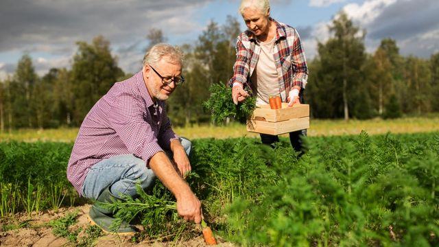 Pourquoi le niveau de vie des retraités s'est effrité ces dernières années