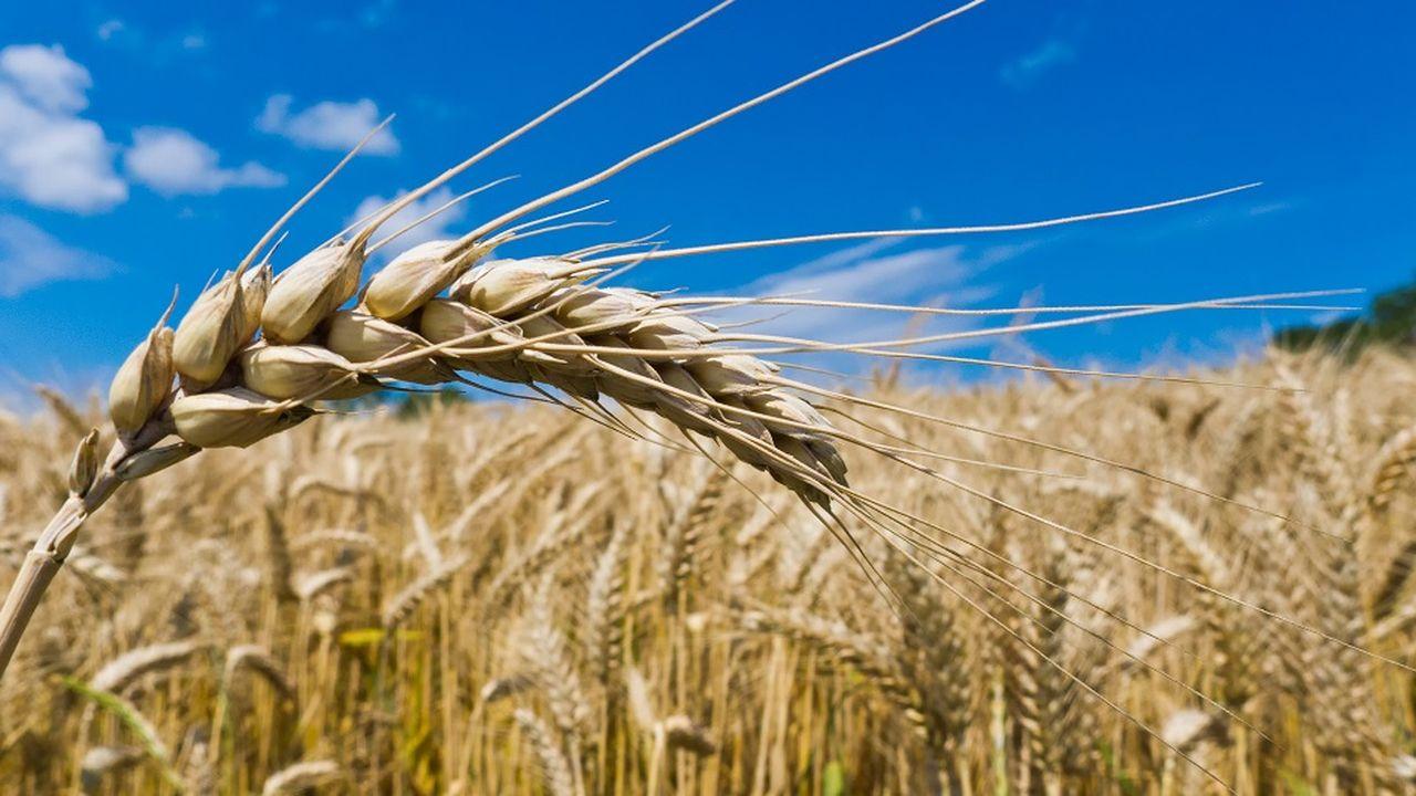 Moins de normes et plus de blé !