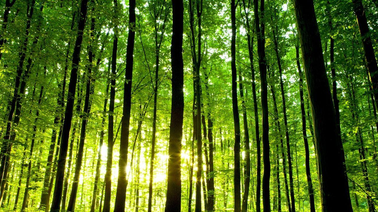 Le marché obligataire gagné par la fièvre verte