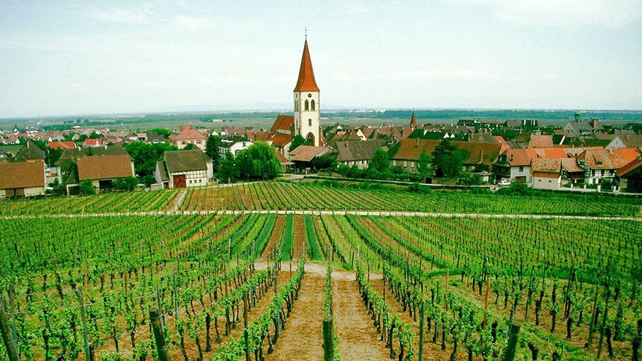 Un vignoble en Alsace.