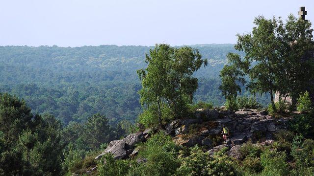 Fontainebleau se bat pour faire classer sa forêt par l'Unesco