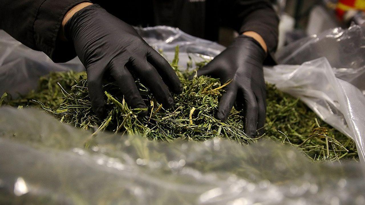 Le Michigan est devenu le onzième Etat à légaliser le cannabis à des fins récréatives tandis que le Missouri et l'Utah l'ont autorisé à des fins médicales