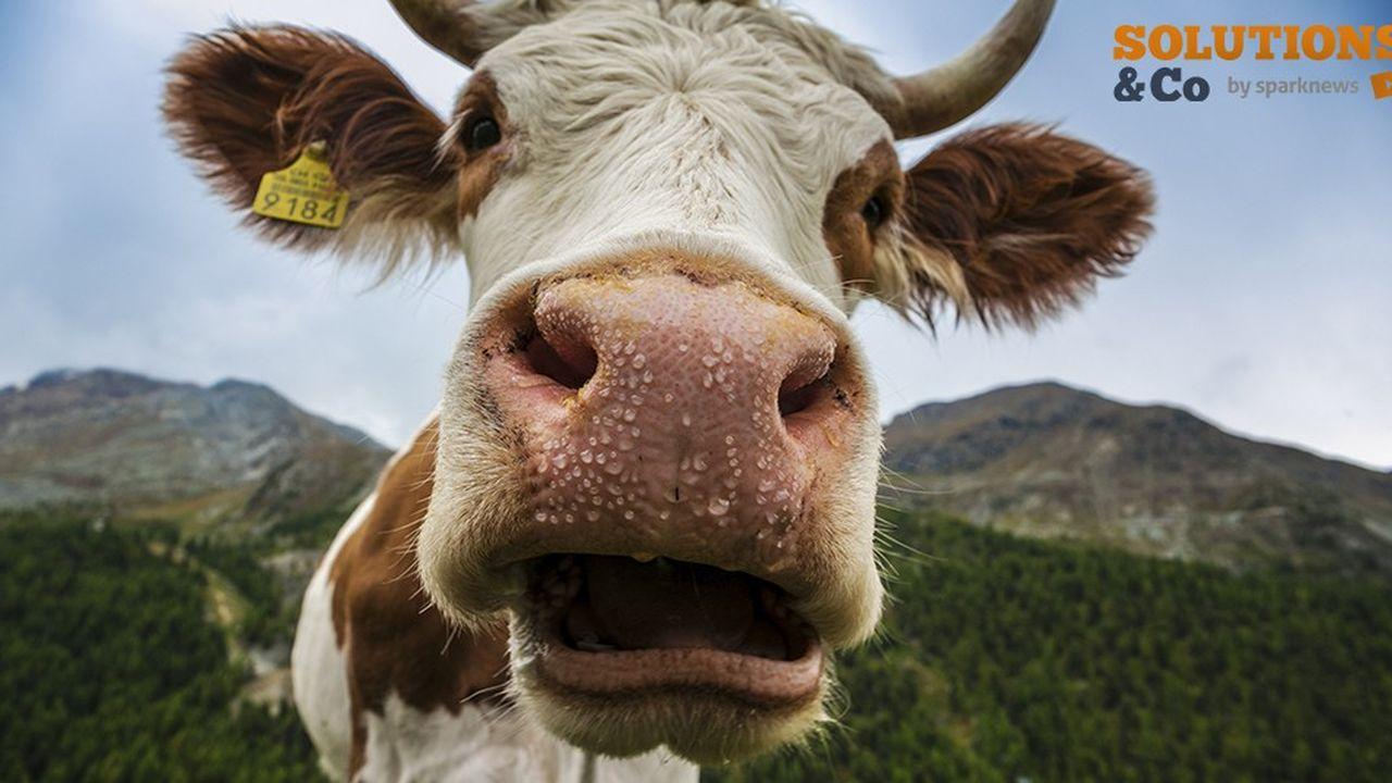 Bien que d'autres additifs alimentaires réduisent les émissions de méthane du bétail, à peine une poignée sont 100 % naturels.