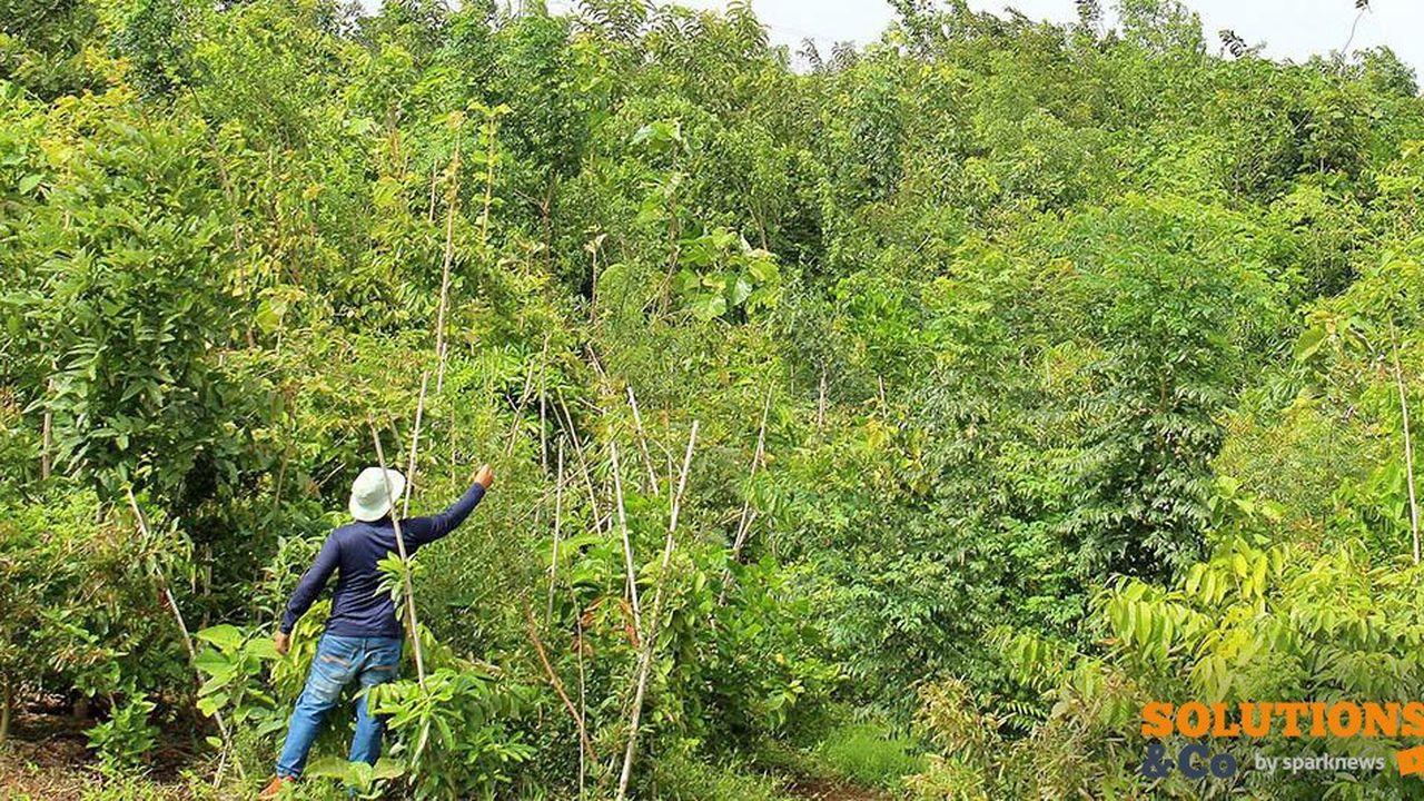 2227847_linde-plante-des-forets-dans-ses-villes-pour-combattre-la-pollution-web-tete-060274343194.jpg