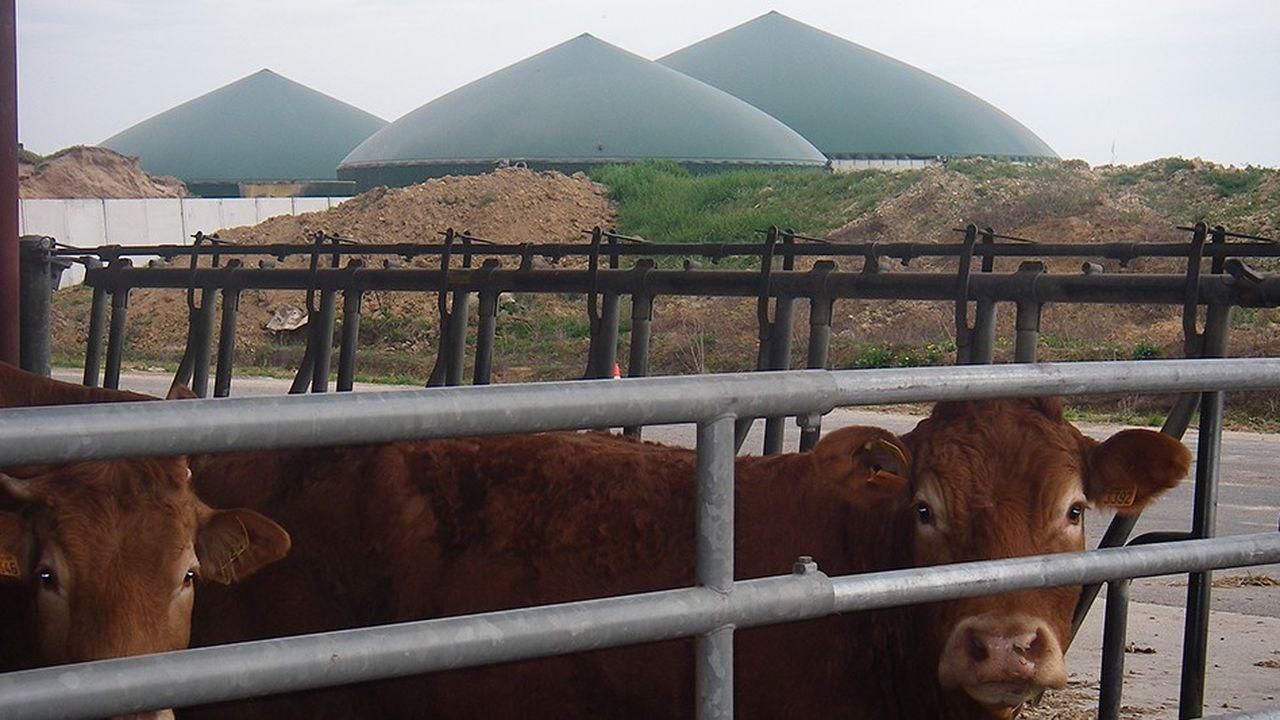 La méthanisation intéresse les éleveurs de bovins.