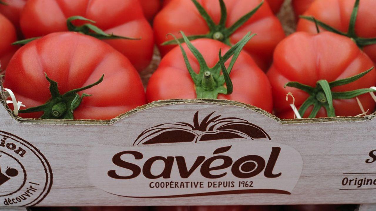 Les trois groupements bretons de tomates Savéol, Prince de Bretagne et Solarenn concentrent plus de 50 % de la production française de tomates.