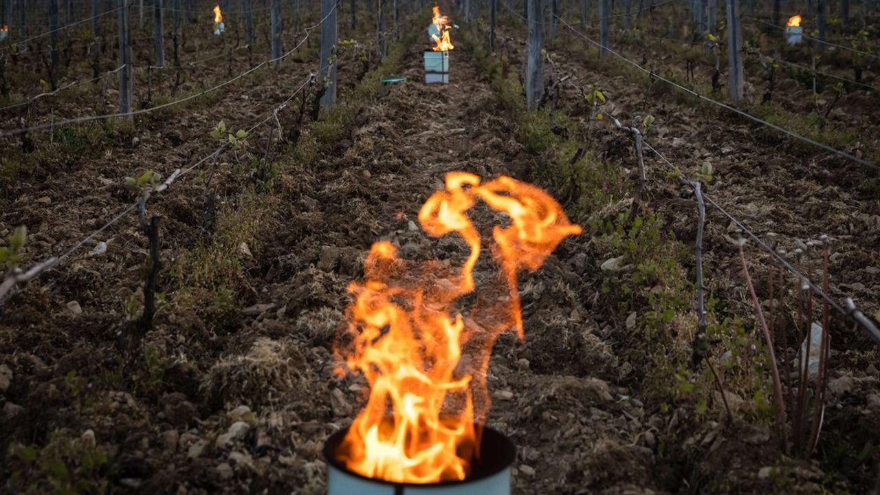 Les vignerons ontrecours aux bougies placées à intervalles réguliers pour dégager un peu de chaleur et un léger nuage qui protège contre les rayons du soleil du petit matin, période la plus froide.