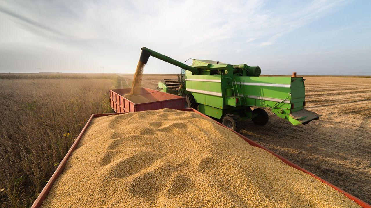 En cinq jours, les cours du blé ont baissé de 2%, ceux du maïs de 5% et ceux du coton de 7%.