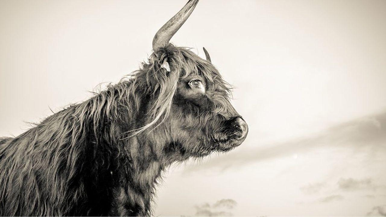 rencontre animal traversant le monde sauvage datant du patron