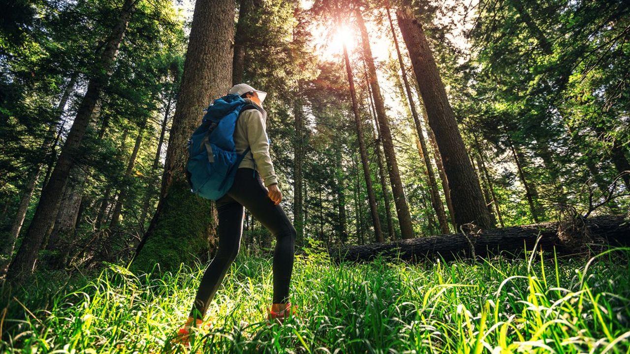 L'application« la forêt augmentée » est le fruit d'un partenariat avec l'Office national des forêts (ONF), le Centre des arts d'Enghien et la région ile de france