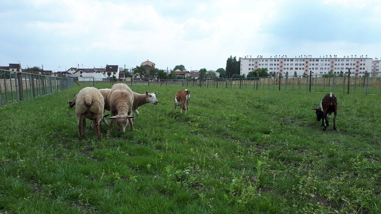 Les Fermes de Gally ont signé un bail agricole de 25 ans et bénéficient d'une franchise de loyers pour les 3 hectares de champssitués sur une ancienne dépendance de l'abbaye de Saint-Denis.