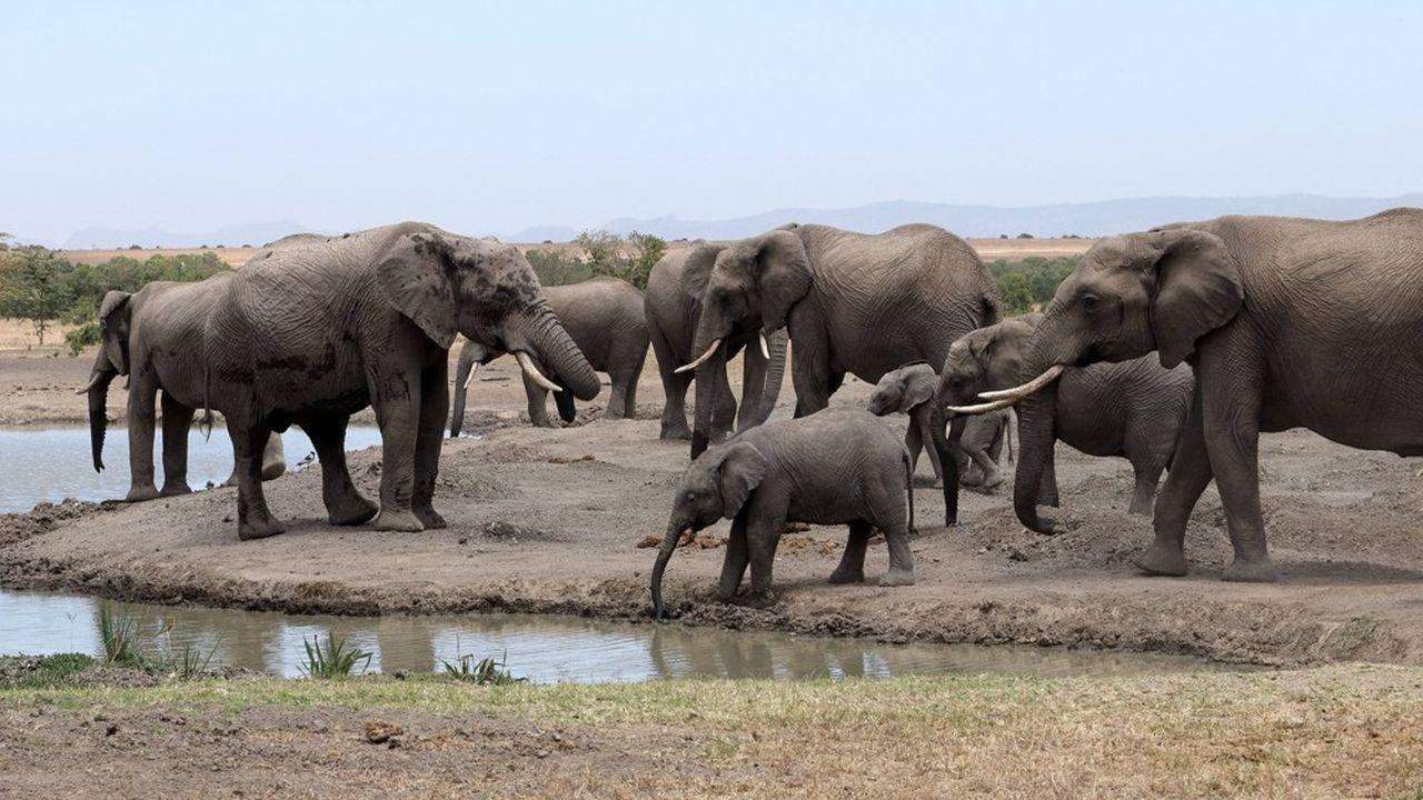 La plupart des Etats africains sont acquis au projet de pacte mondial pour l'environnement qui n'est pas parvenu à passer le cap des préliminaires, jeudi à Nairobi.