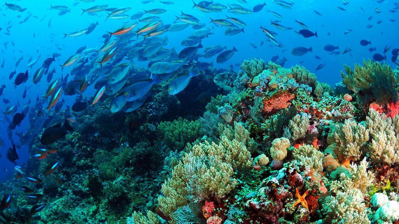 Ce prêt aidera CDC Biodiversité à investir, réhabiliter et gérer des sites protégés en France.