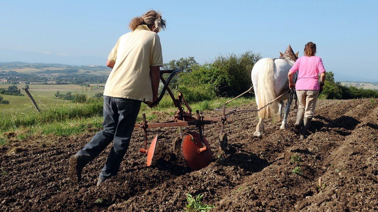 Plus de 10.000 emplois ont basculé en 2017 dans l'agriculture biologique qui contribue à la protection des sols.