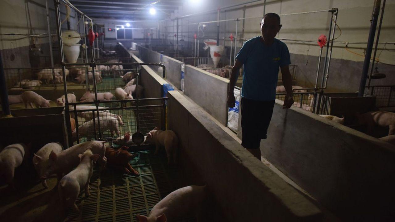 Au dernier pointage officiel, la Chine compte 136 foyers de peste porcine africaine répartis dans 32 provinces et 1,13million de porcs sont morts ou ont été abattus dans le but de freiner la propagation.