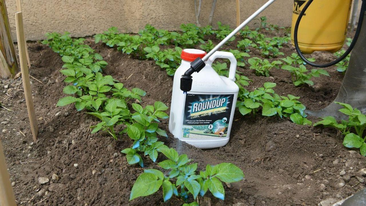 Depuis le rachat de Monsanto en juin2018 pour 63milliards d'euros, Bayer doit affronter plus de 13.000 requêtes judiciaires visant l'herbicide au glyphosate de la firme américaine, le Round Up