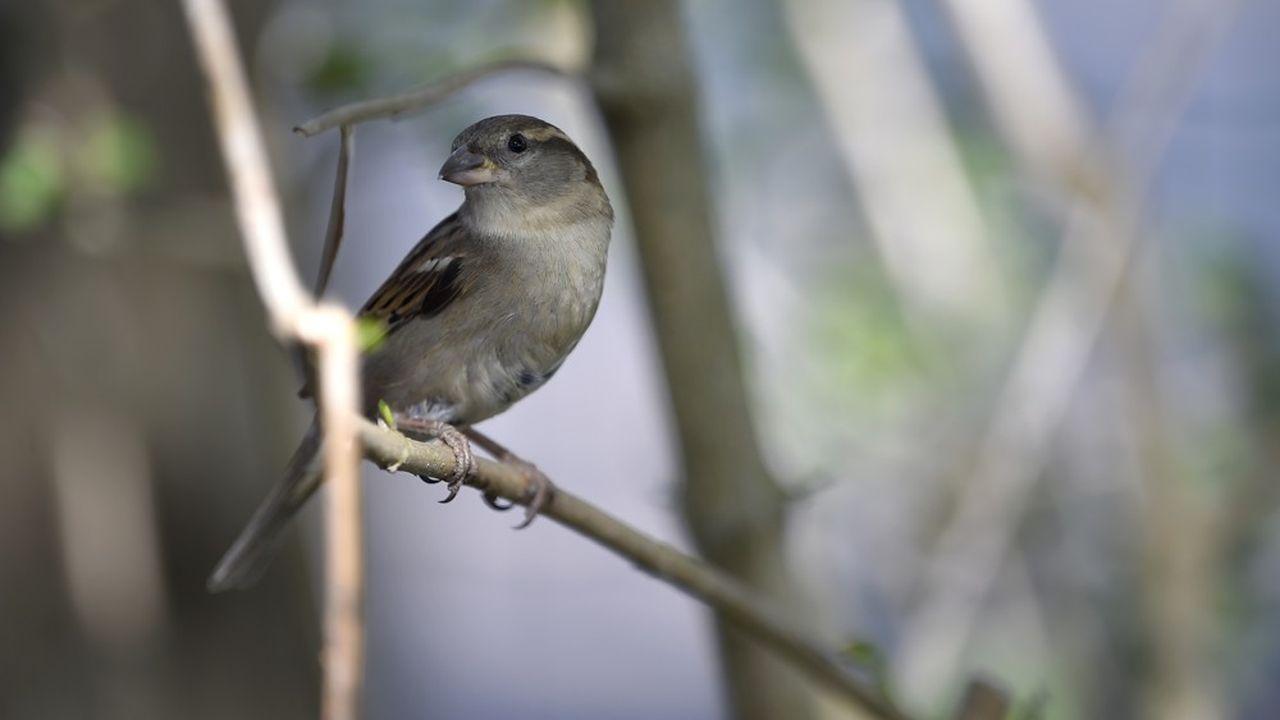 L'homme est le principal responsable des menaces pesant sur la biodiversité en Ile-de-France.
