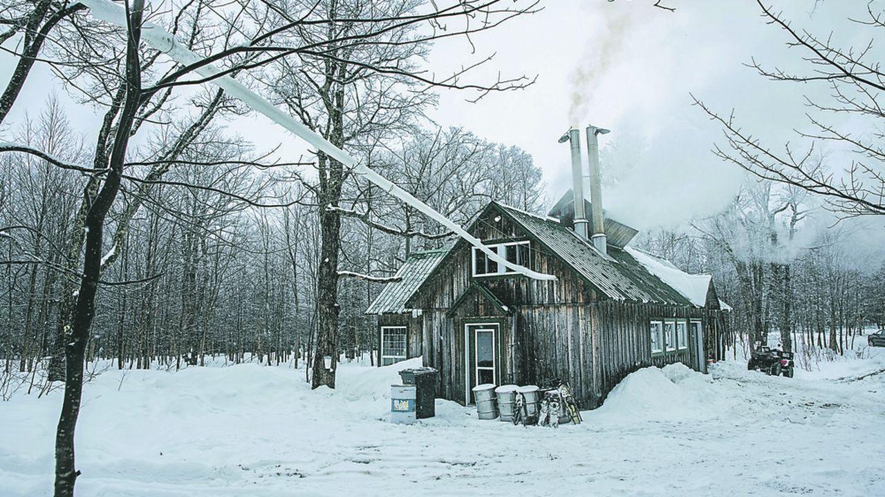 L'eau d'érable est récoltée à la fin de l'hiver dans les cabanes à sucre au Canada. Des tuyaux relient les arbres entaillés pour recueillir l'eau sucrée portée à 66 degrés et la concentrer en sirop.