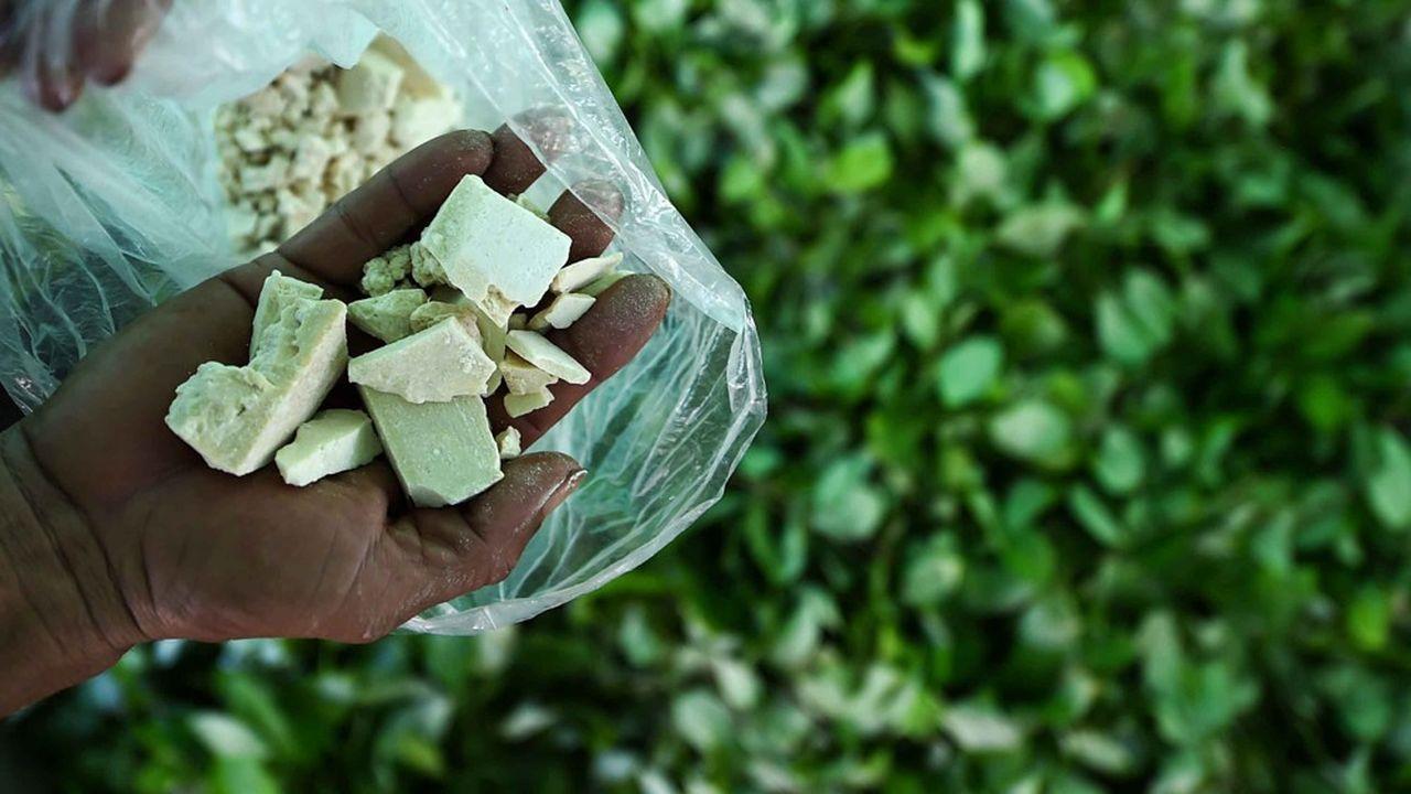 En Colombie, pays qui assure près 70% de la production mondiale, les surfaces d'arbres à coca ont progressé de 17% en 2017