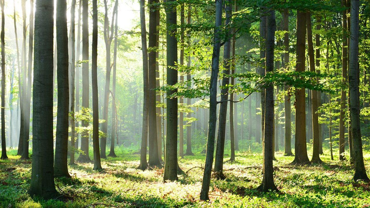 Sur les vingt dernières années, le prix de l'hectare de forêt a augmenté en moyenne de 3,2% par an.