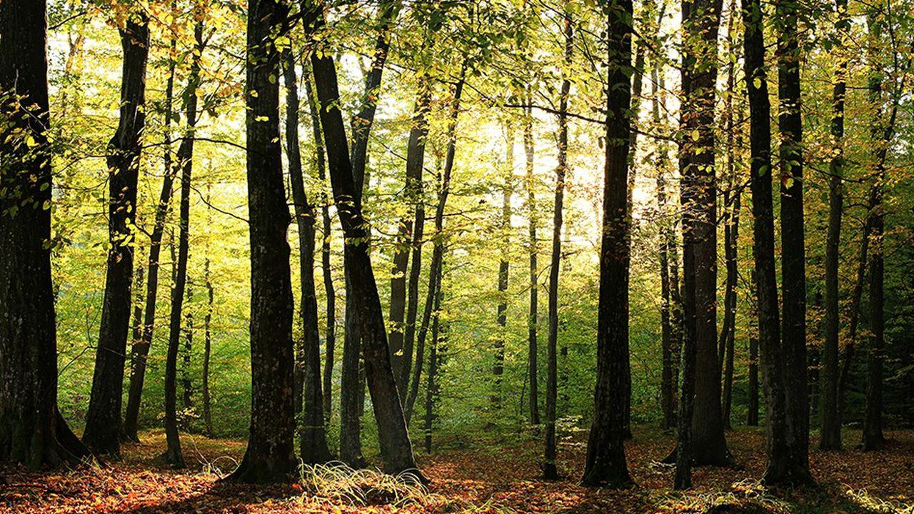 Le prix de l'hectare de forêt se valorise régulièrement de 3 à 4% par an depuis 2008.