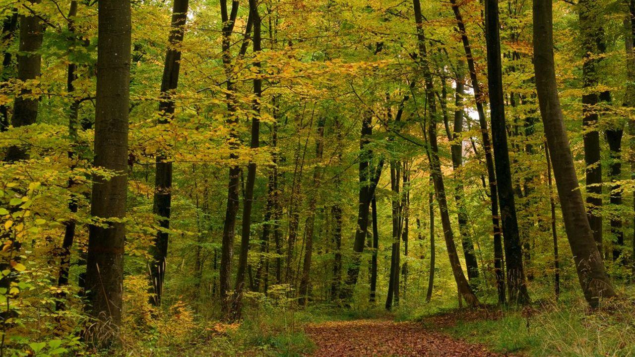 Au total, 130.100hectares de forêts ont été vendus en 2018 selon la Safer, l'organisme chargé de la gestion forestière en France.