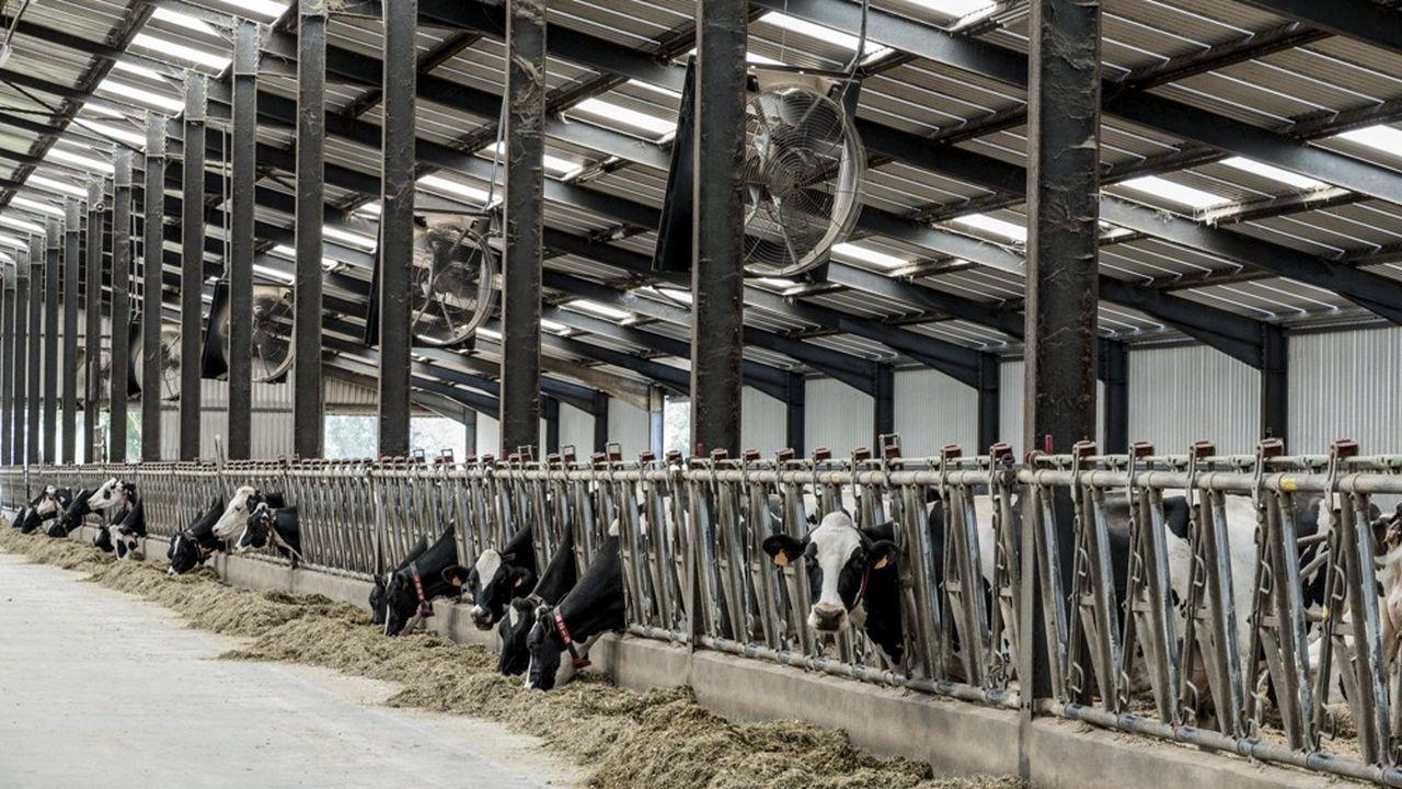 Les producteurs européens de boeufs sont parmi les plus inquiets devant cet accord qui fait la part belle aux intérêts industriels européens, et à certains secteurs agricoles précis (vins, spiritueux, fromages…)