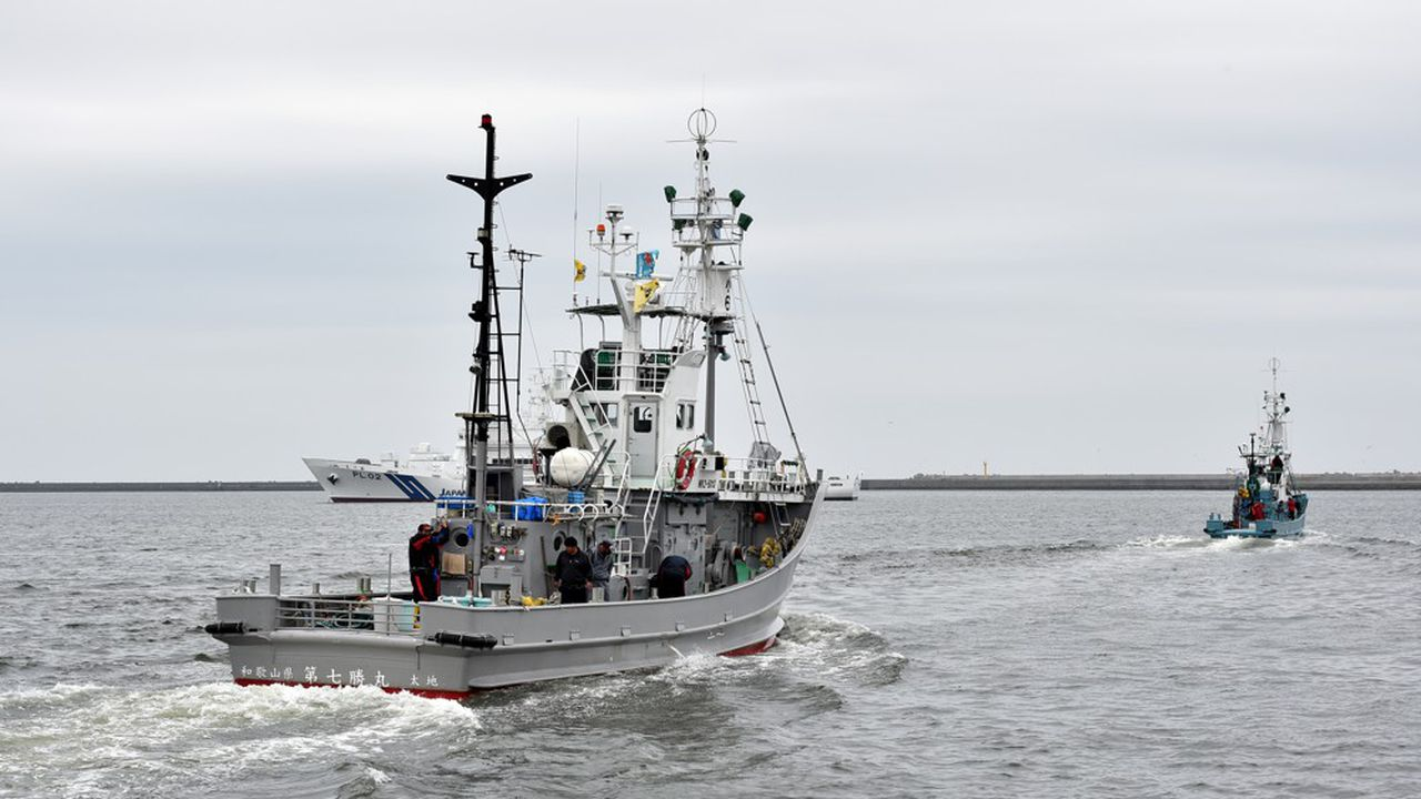 De petits bateaux baleiniers ont appareillé ce lundi, après des cérémonies officielles, de plusieurs ports du nord du pays pour aller tenter d'attraper différents types de cétacés dans les eaux de sa zone économique exclusive