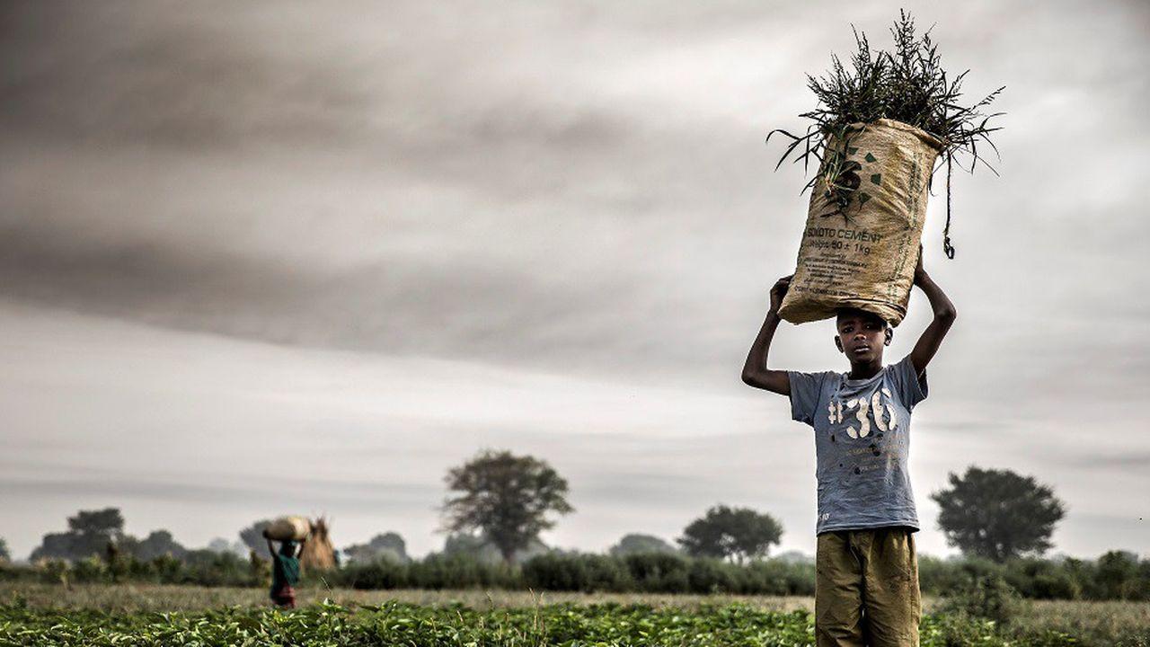 Selon l'Onu, les travailleurs agricoles pauvres des régions les plus chaudes, comme ici au Nigéria, devraient être les plus impactés par la hausse des cas de stress thermique.