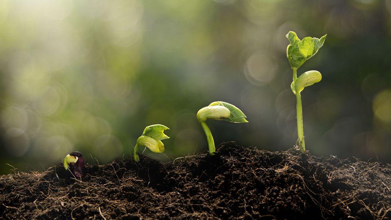 Pour faire naître de belles entreprises de taille intermédiaire, on peut certes faire grossir les petites… mais on peut aussi « découper » les plus grosses.