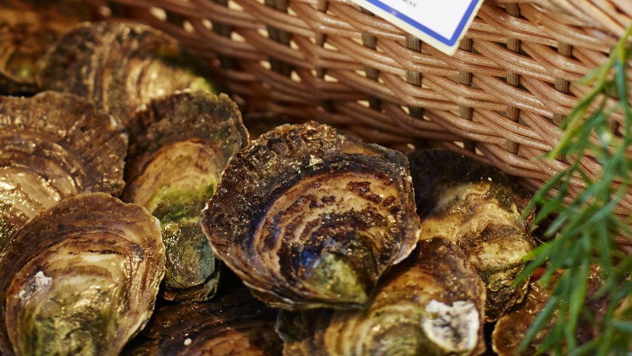 Les huîtres plates ne pèsent que 2% de la production ostréicole française.