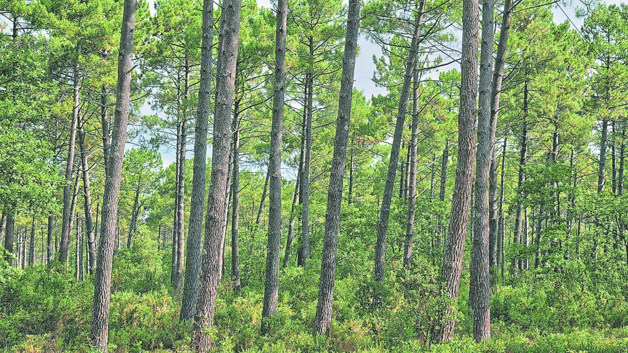 Plus de 3millions de propriétaires privés détiennent des parts de forêts.