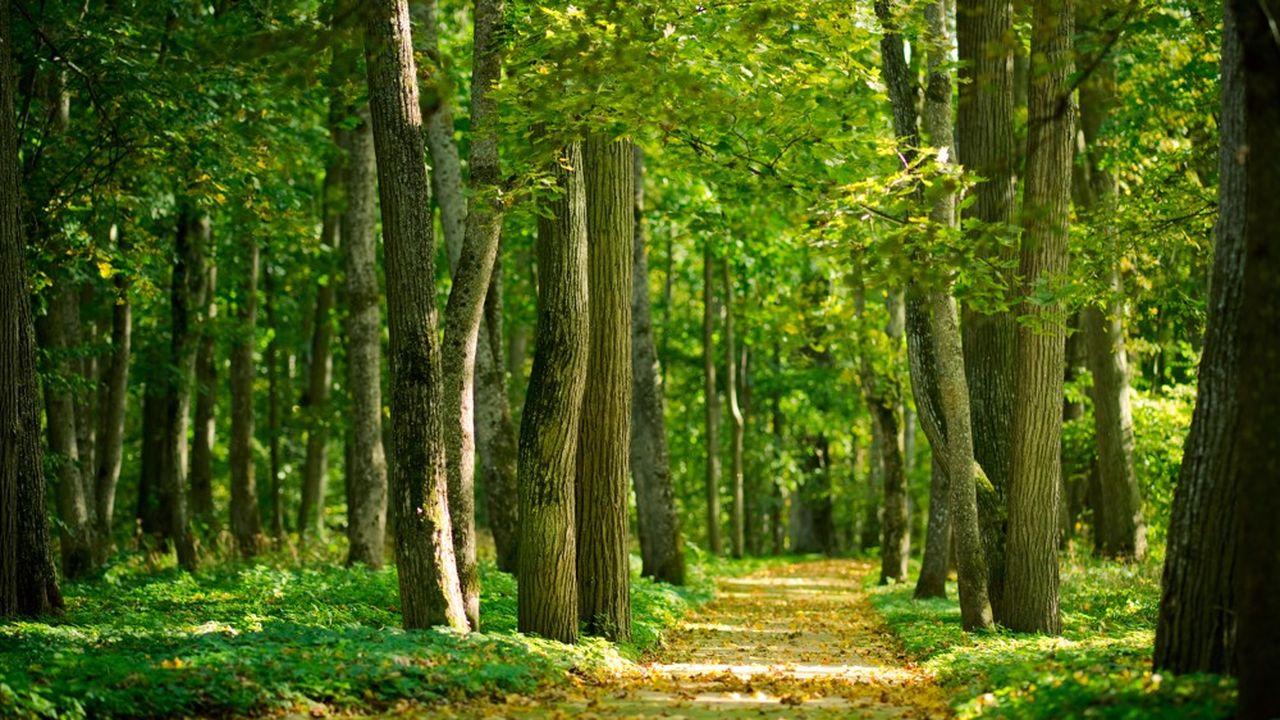 Les 16.900hectares de forêts françaises captent à eux seuls 15% des émissions de gaz à effet de serre du pays.
