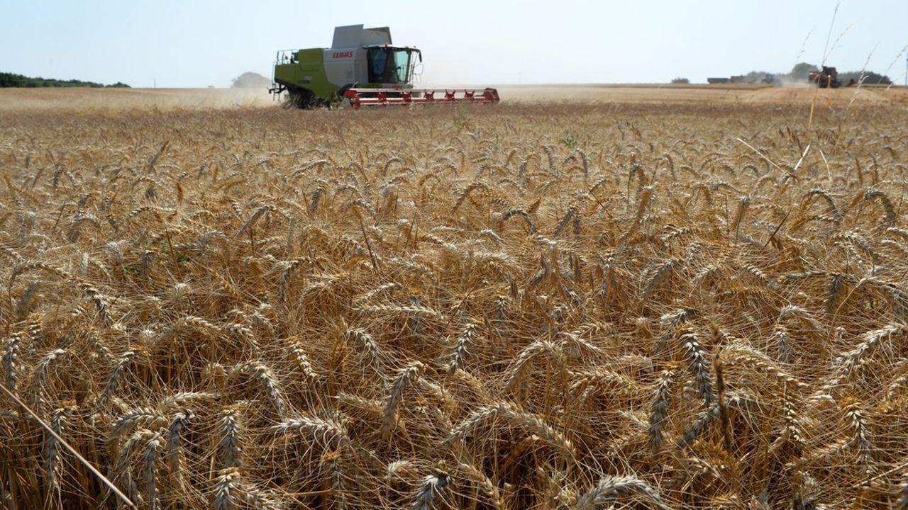 Le rendement aurait pu être encore meilleur sans les températures proches de 40°C qui ont pénalisé le remplissage des grains en juin. Mais dans l'ensemble, l'impact de la canicule sur la récolte de blé tendre est très limité.