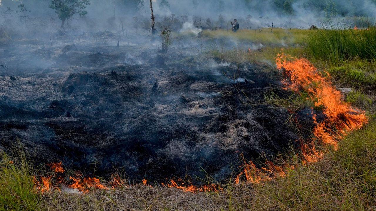 La culture de l'huile de palme est l'une des principales raisons de la déforestation en Indonésie et en Malaisie.