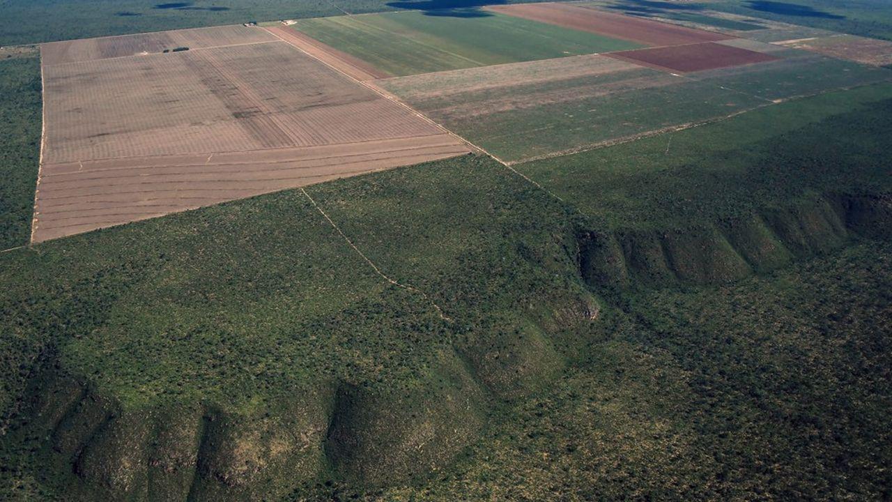 Depuis janvier, plus de 3.500km2 de forêt amazonienne ont été détruits, selon les estimations du «New York Times».