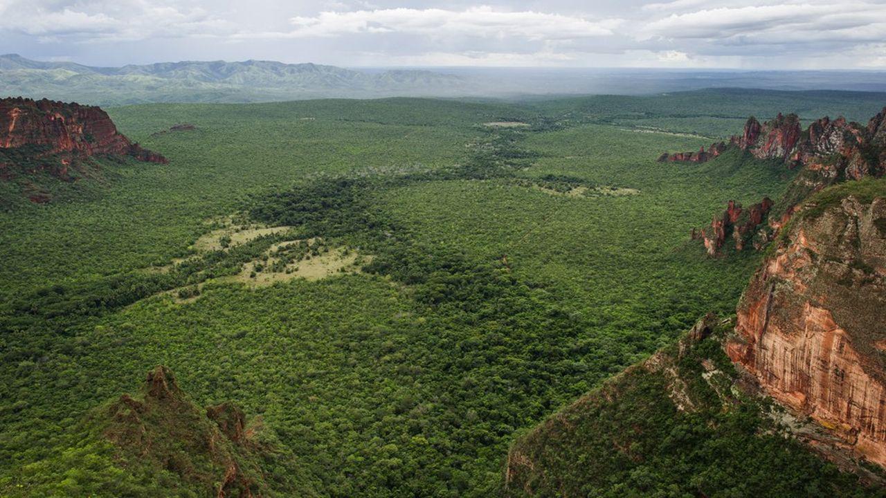 Vue de la forêt amazonienne dans l'Etat du Mato Grosso dans l'ouest du Brésil.