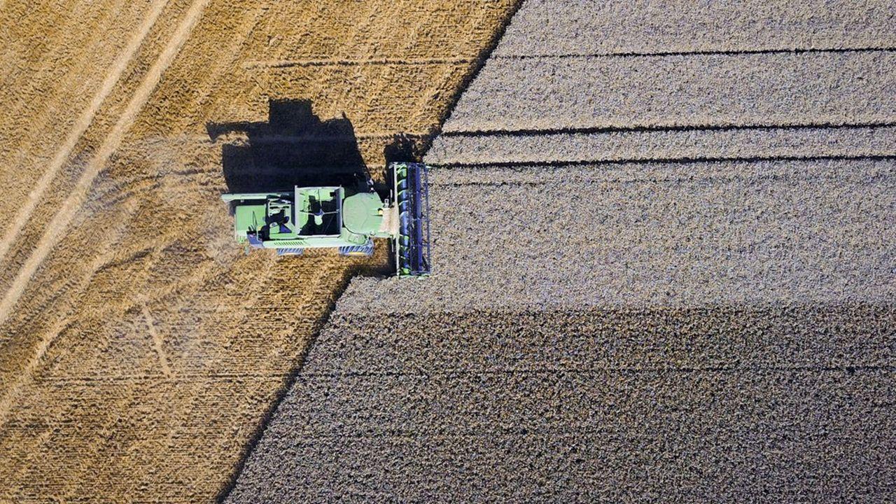 Malgré le caractère exceptionnel de la récolte de 2019, les céréaliers ne s'attendent pas à s'enrichir cette année. Les baisses des cours enregistrées ces derniers jours les inquiètent.