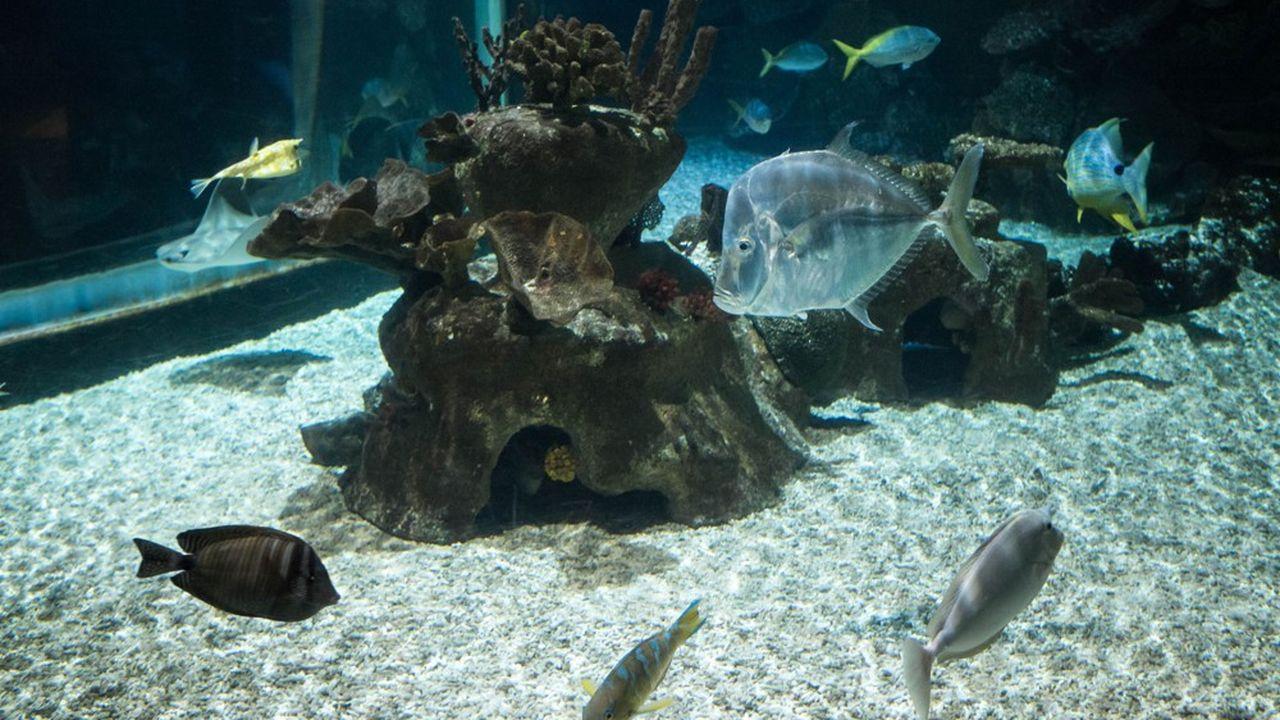 Une bactérie transforme l'ammoniac des déjections de poissons en nitrate. Il est ensuite absorbé par les plantes.