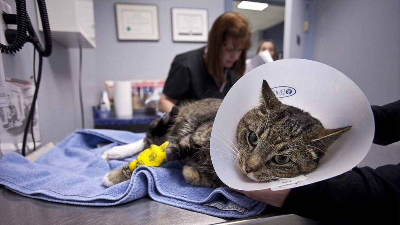 En février2019, la famille Reimann a déboursé pas moins de 1,2milliard de dollars pour s'offrir la quarantaine de cliniques vétérinaires du groupe Compassion-First Pet Hospitals.