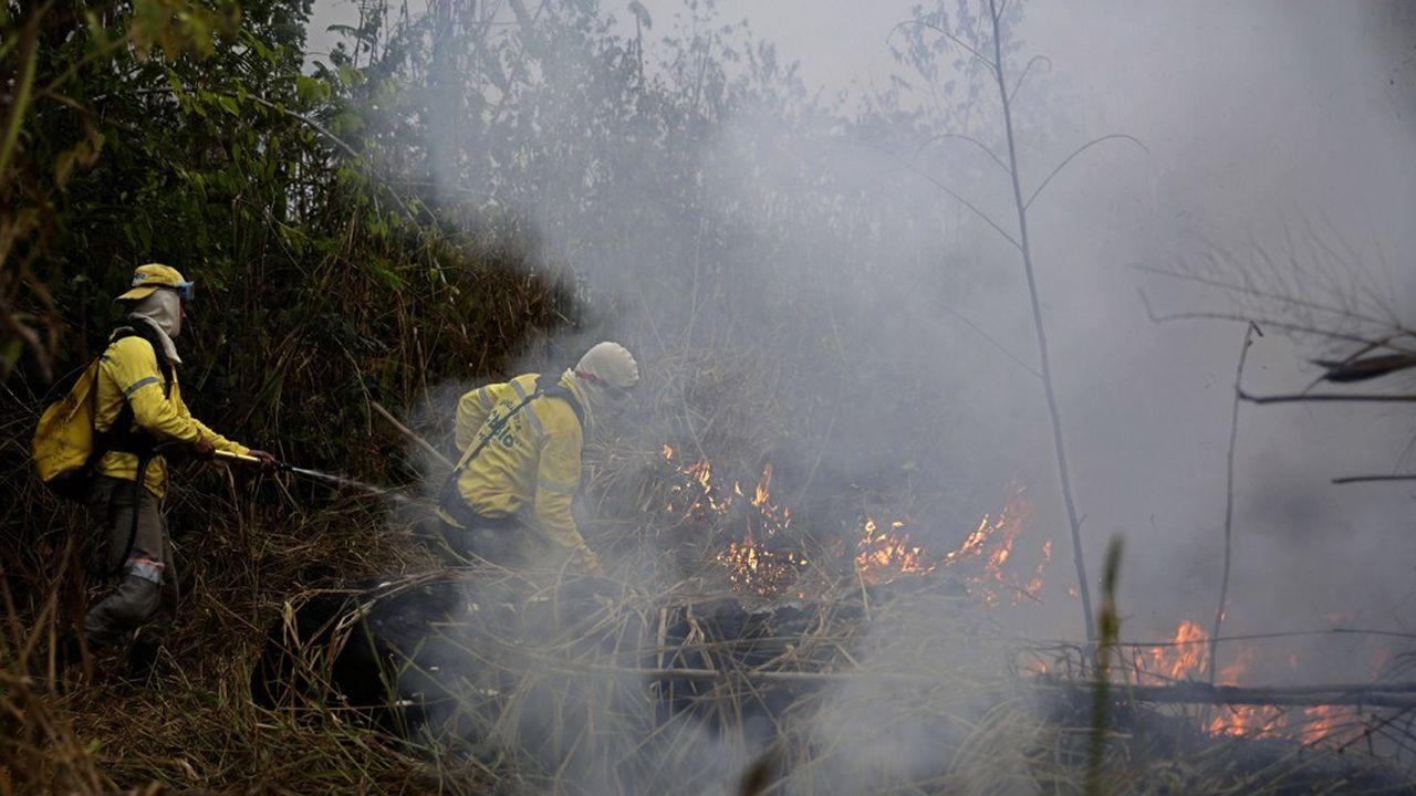 Près de 80.000 feux de forêt ont été répertoriés au Brésil depuis le début de l'année, dont un peu plus de la moitié en Amazonie